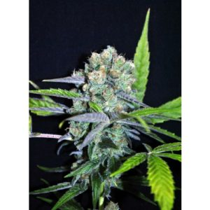 CBD_outdoor_mix_2res